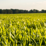 Tips for effective advocacy for agriculture