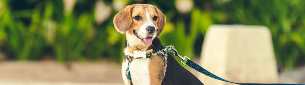 Mindfulness and Pro-Animal behavior